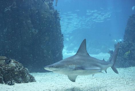 oceano_atlantico profundidad con tiburón